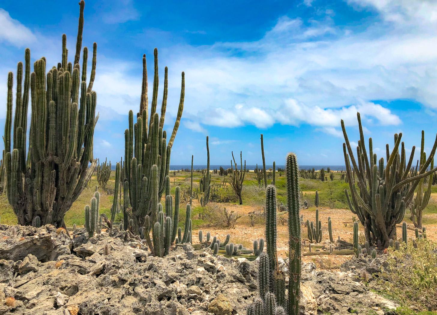 Het droge landschap van Bonaire