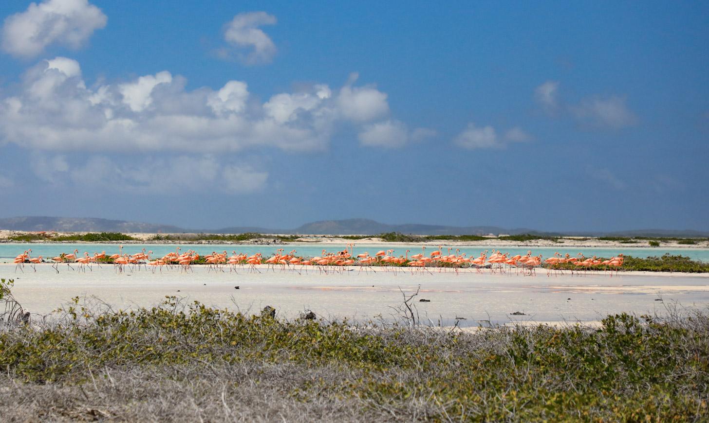 Een groep flamingo's in de zoutpannen